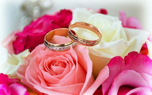 Фото два кольца обручальных