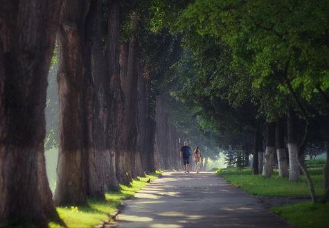 Обои Парень и девушка, совершающие утреннюю прогулку по аллее парка с могучими стволами деревьев