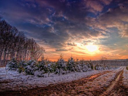 Обои Дорога, рядом с которой растут молодые ели, зимой