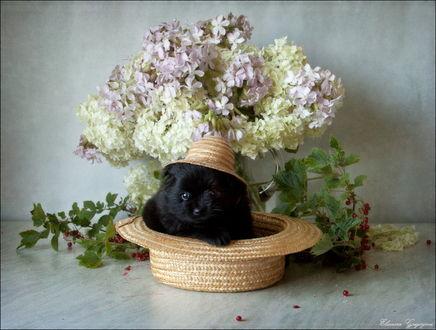 Обои Черный щенок, сидящий в соломенной шляпе в окружении цветов, стоящих в стеклянной вазе с водой и веток красной смородины, автор Элеонора Григорьева