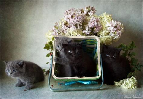Обои Серые и черные котята, сидящие на столе рядом с букетом цветов, стоящих в вазе, на поверхности лежат ягоды красной смородины, автор Элеонора Григорьева