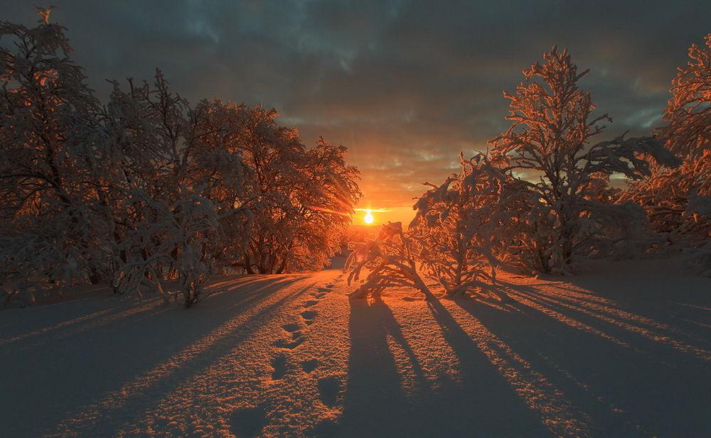 Обои для рабочего стола Восходящее из-за линии горизонта солнце на утреннем небосклоне с темными облаками осветило своими лучами заснеженную опушку леса