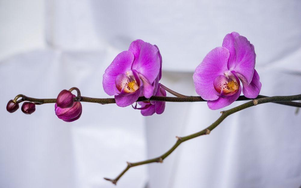 Обои на рабочий стол фиолетовые орхидеи