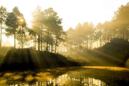 Обои Золотистые лучи восходящего солнца на утреннем, безоблачном небосклоне осветили своими лучами небольшой водоем, расположенный на краю поселка с уходящим от берега человеком