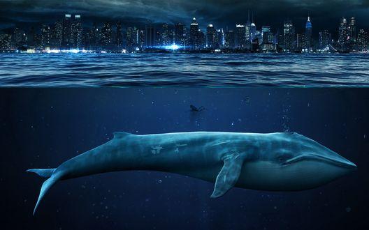 Обои Голубой кит и водолаз на фоне мегаполиса