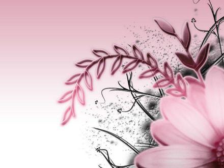 Обои Векторный рисунок цветка в розовом цвете
