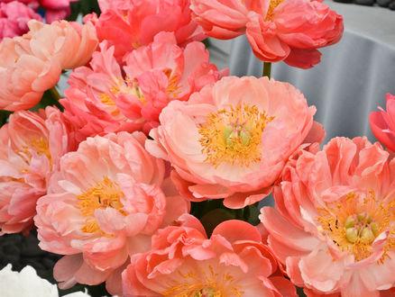 Обои Букет розовых цветов