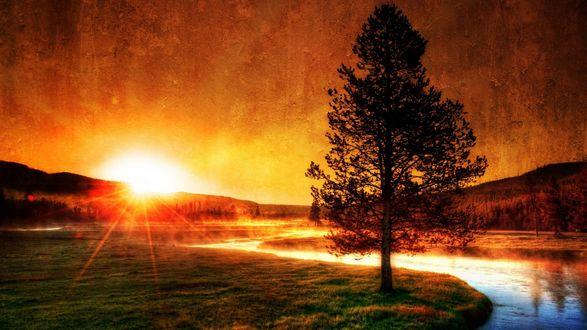 Обои Дерево в закате солнца