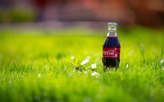 Обои Кока-Кола / Coca-Cola на зеленой траве
