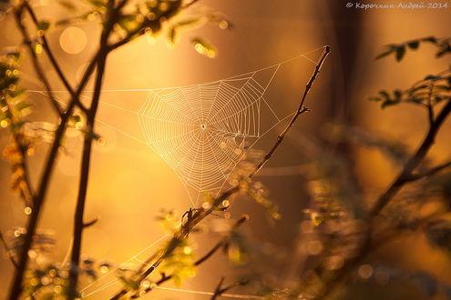 Обои Паук сплел паутину между веток кустов, находящихся в ослепительных, солнечных лучах на размытом фоне, автор Андрей Корочкин