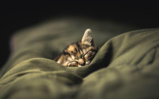 Обои Котенок спит в одеяле