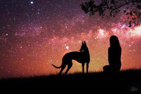 Обои Девушка и собака породы доберман, сидящие на фоне звездного неба