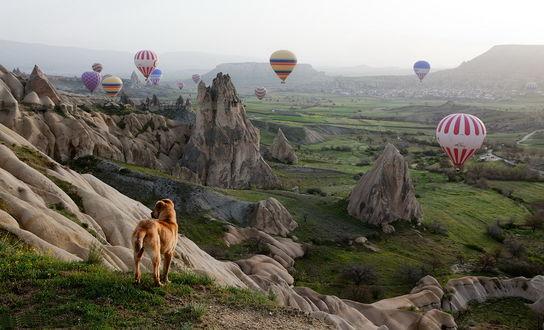 Обои Рыжая собака, стоящая на пригорке на фоне скалистых образований, парящих в небе разноцветных воздушных шаров