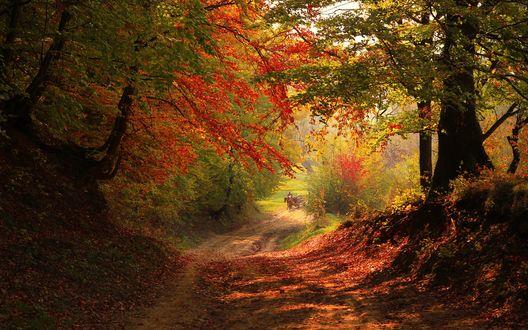 Обои Мужчина с лошадью идут по усыпанной осенними листьями дороге