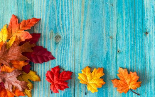 Обои Осенние листья на голубом фоне