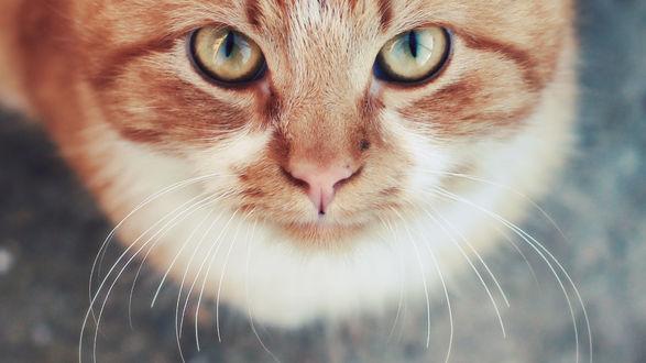 Котенок смотрящий вверх скачать