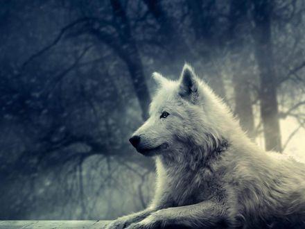 Обои Волк на фоне природы