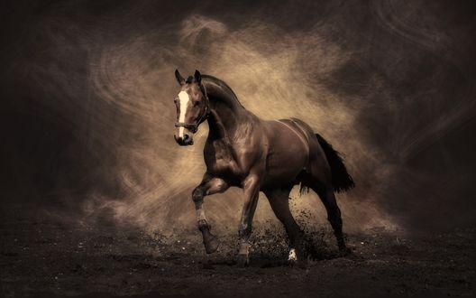 Обои Красивый конь