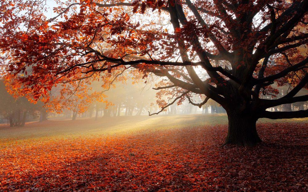 Обои Дерево с осенними листочками стоит на ковре из ...