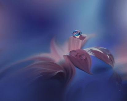 Поздравления на лепестках цветка