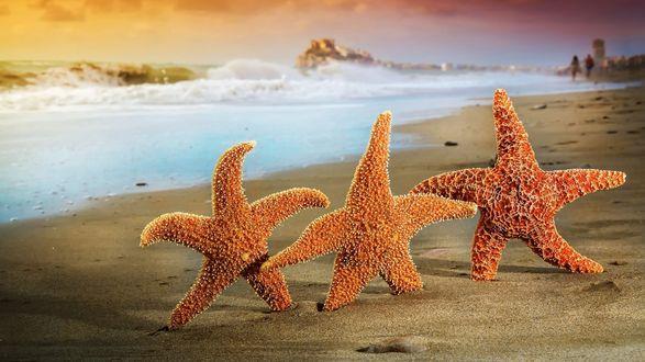 Обои Три звезды на фоне моря