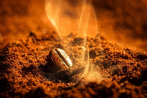 Обои Ароматное кофейное зерно, лежащее на молотом кофе