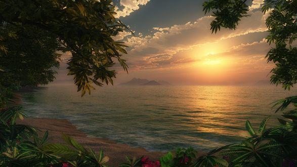 Обои Яркие цветы на берегу моря