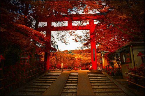 Обои Красные ворота тории и лестница ведущая в святилище, Япония / Japan