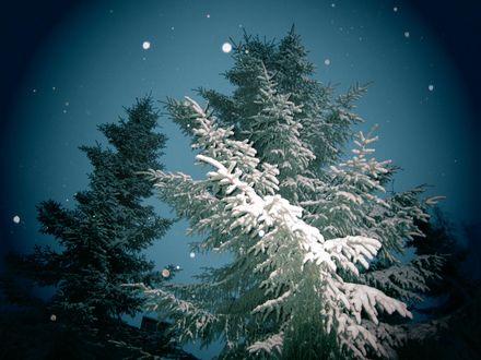 Обои Ели, покрытые густым слоем инея на фоне ночного неба