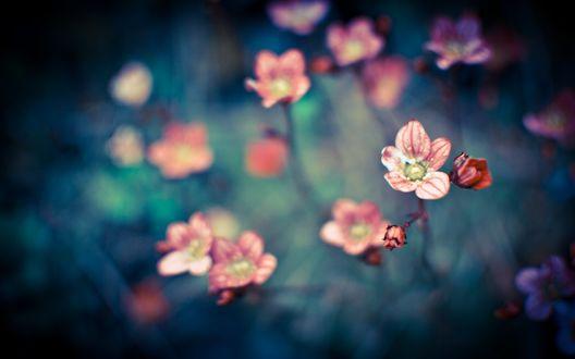 Обои Мелкие розовые цветы