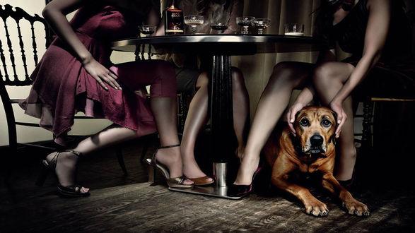 Обои Собака под столом возле женских ног