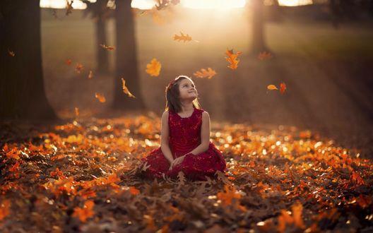 Обои Маленькая девочка сидит на осенних листьях
