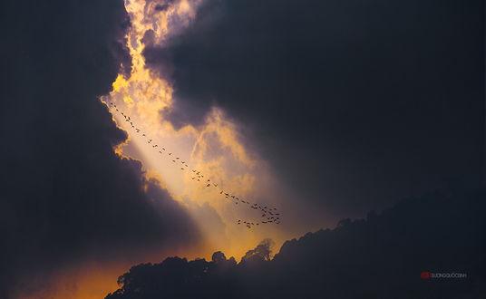 Обои Стая перелетных птиц на фоне солнечного окна среди темных облаков, пролетающих над деревьями, автор DUONG QUOC DINH