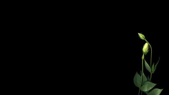 Обои Бутоны цветов на черном фоне