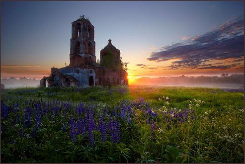 Обои Яркие, солнечные лучи на утреннем небосклоне с незначительной облачностью осветили поляну с цветущими мускари, разрушенную кирпичную церковь, автор Heger