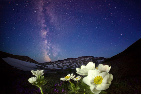 Звездное небо цветы