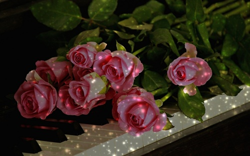 Обои Букет розовых роз на клавишах фортепиано