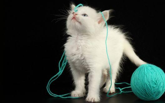 Обои Белый котенок с клубком ниток
