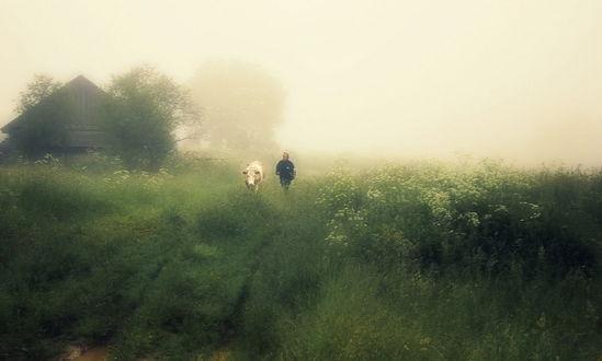 Обои Деревенская женщина, ведущая свою корову на пастбище по дорожной колее среди густой, зеленой травы на фоне густого, молочного тумана, закрывшего утренний небосвод, автор Александр