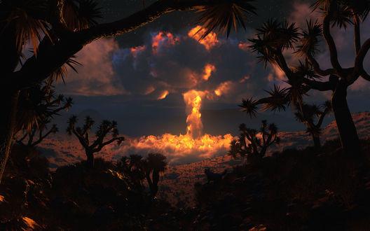 Обои Взрыв ядерной бомбы в пустынной местности среди пальм и наблюдающая за действием собака