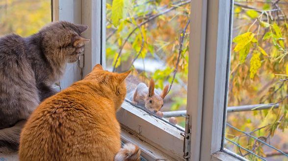 Обои Коты смотрят через окно на белку