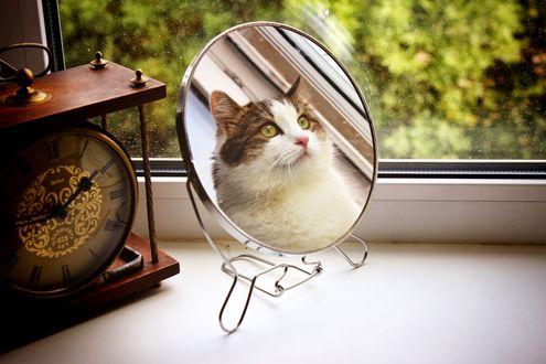 Обои Отражение кошки в зеркале