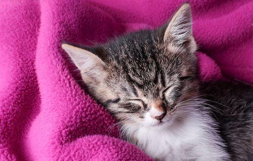 Обои Милый котенок спит на одеяле