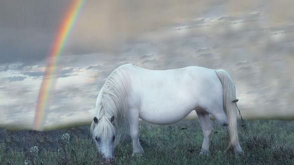 Обои Белая лошадь пасется в поле, в небе радуга