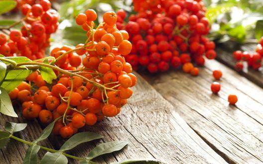 Обои Красные ягоды рябины лежат на деревянной поверхности