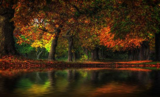 Обои Пруд в парке, окруженный деревьями с желтеющими листьями