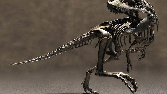 Обои Стоит скелет громадного тиранозавра