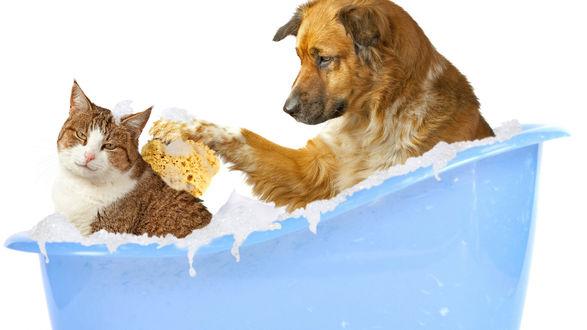 Обои Собака сидя в голубой ванночке, моет мочалкой спину кошке, закрывшей глаза от удовольствия