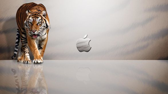 Обои Тигр в рекламе Apple