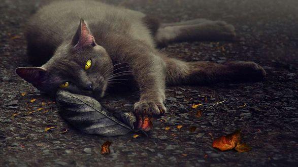 Обои Кот лениво тянет лапку к листу
